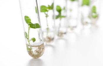 3er Encuentro Científico: Biología Vegetal y Biotecnología
