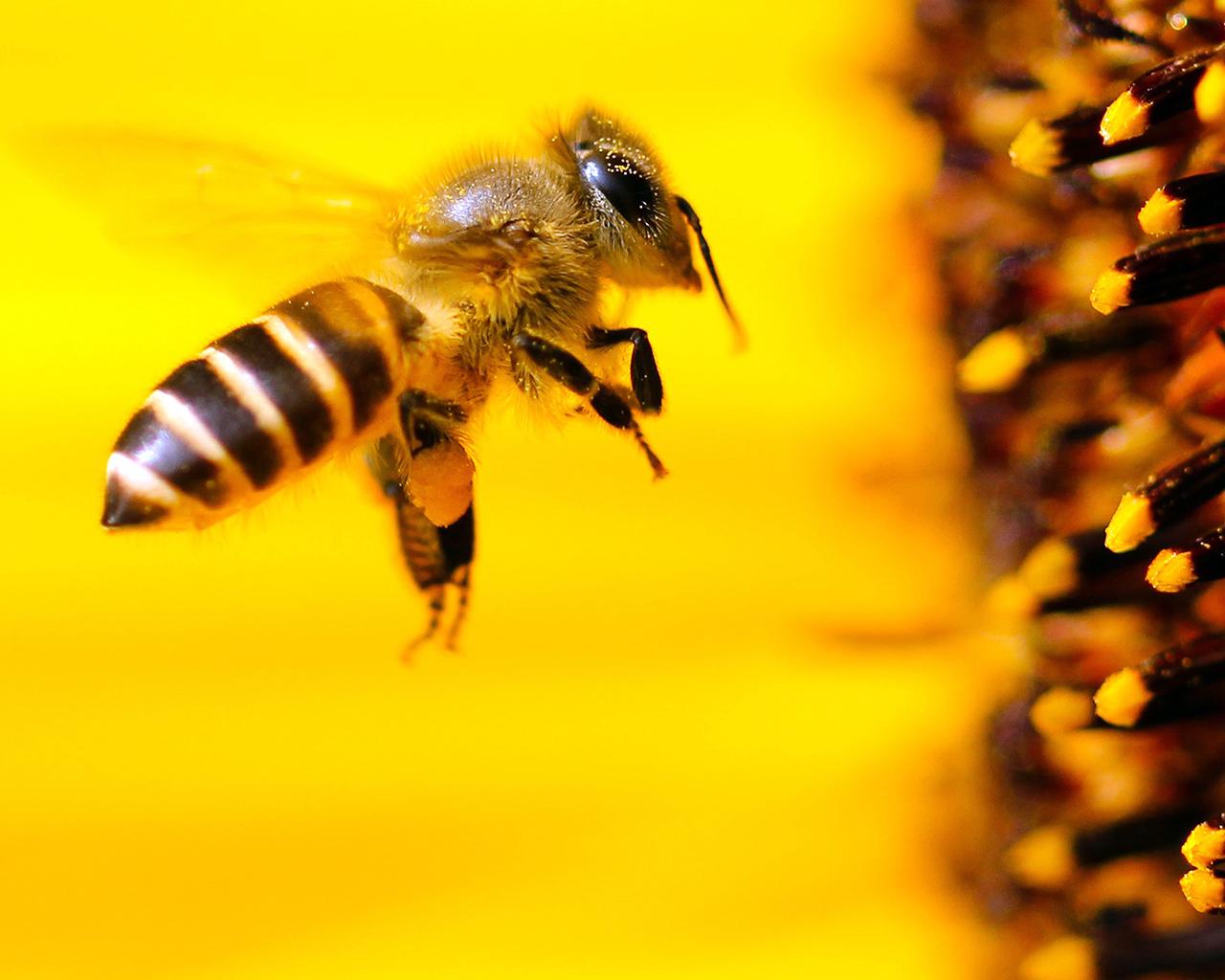 Resultado de imagen para abejas