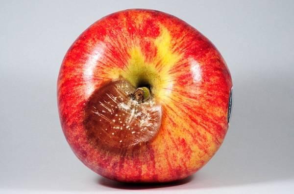 Sistema de Predicción temprana de la enfermedad de ojo de buey en manzanas