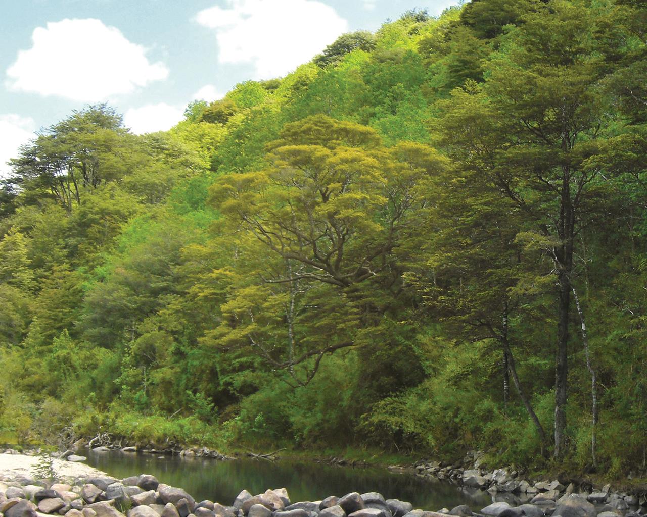 Investigación revela que ruiles están amenazados por otras especies arbóreas