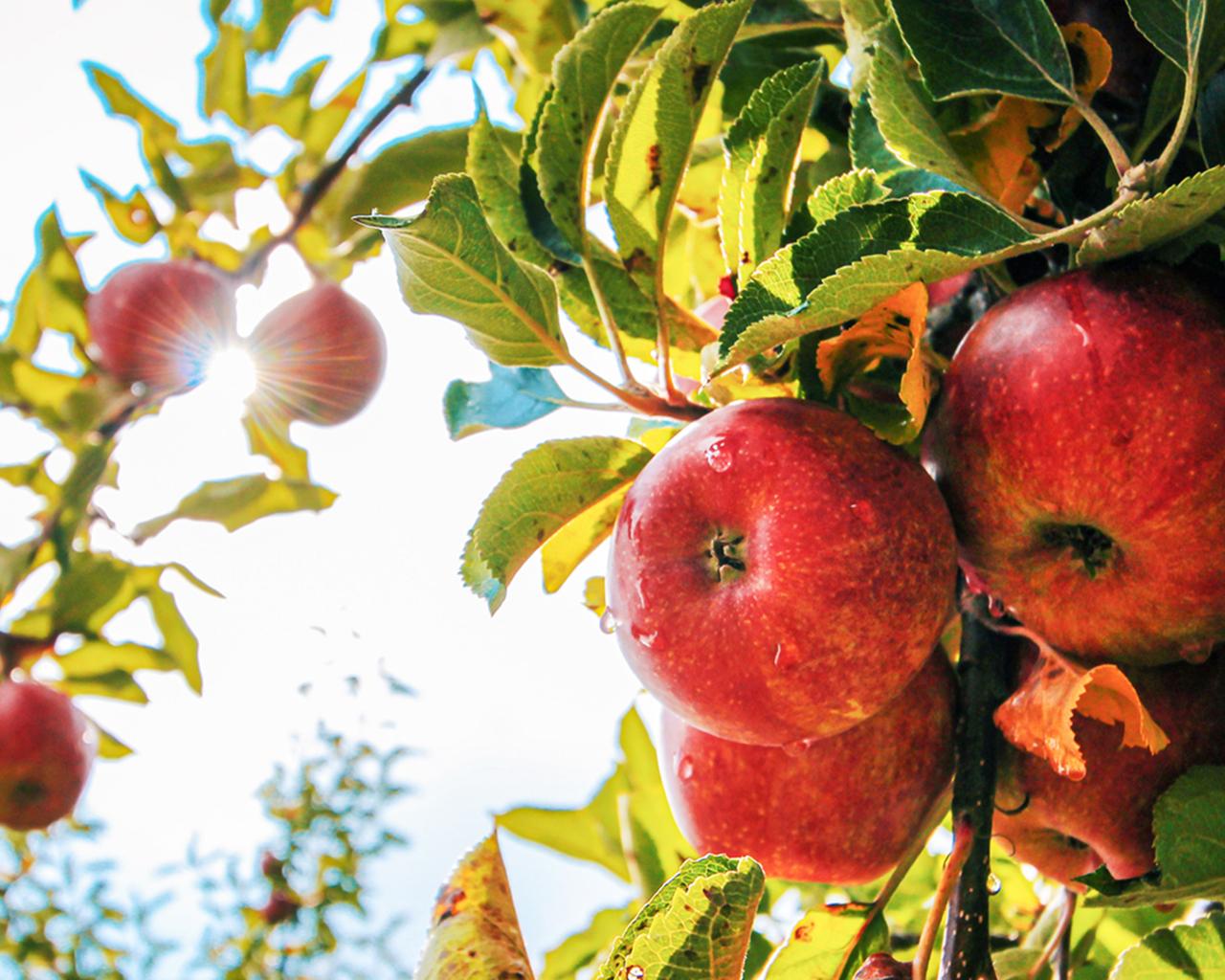 Revisan desarrollo de actividad frutícola en Chile y Perú