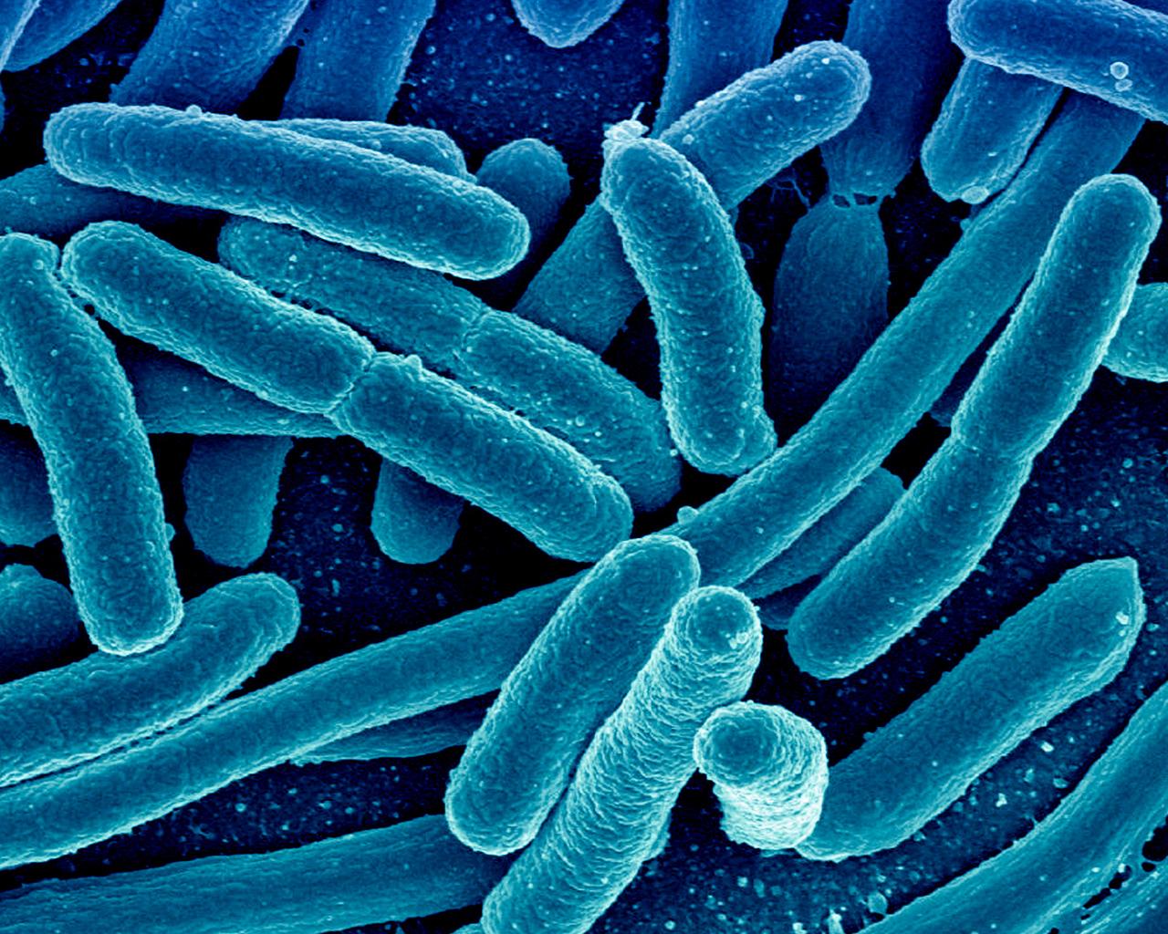 Probarán tecnología emergente en alimentos contaminados con bacteria resistente a los antibióticos