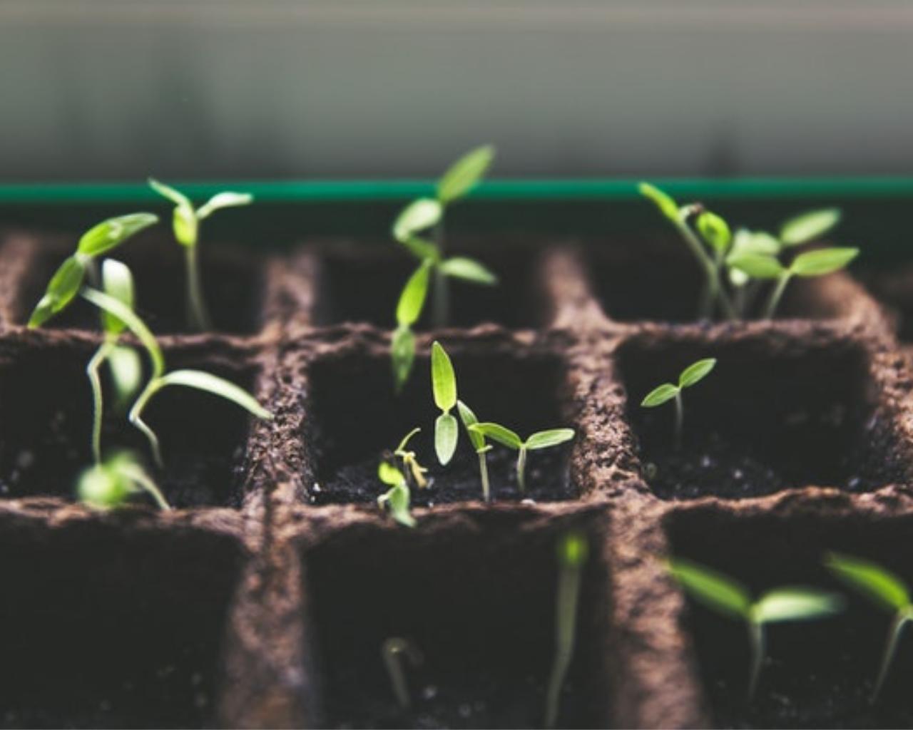 Thinkagro integra programa de innovación que asesorará a empresarios agroindustriales de Colombia