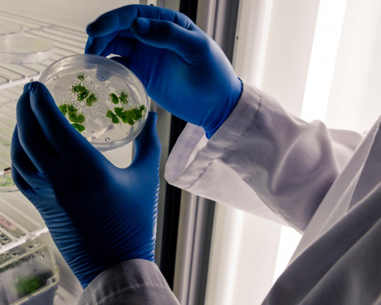 Crean laboratorio biotecnológico que potencia la industria alimentaria